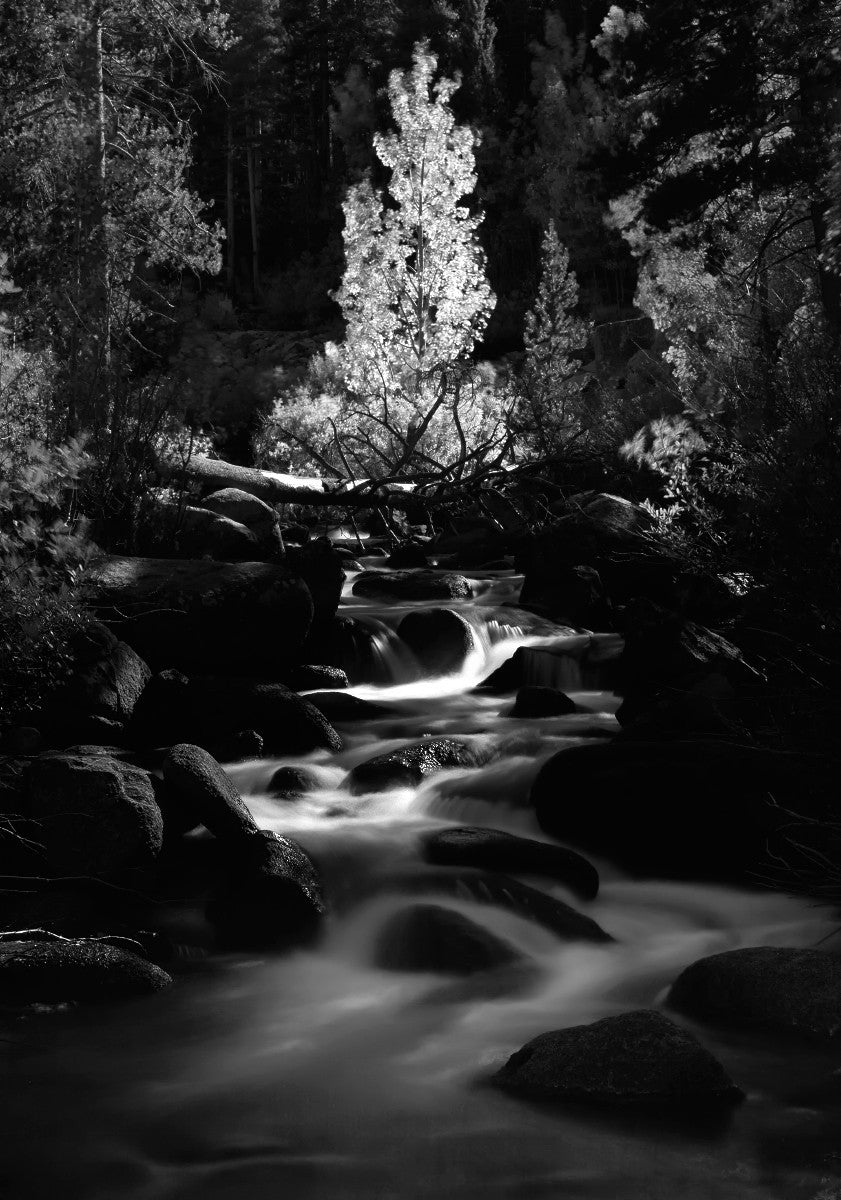 Enchanted in black and white fine art print by pachecp
