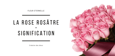La Signification De La Rose Rose