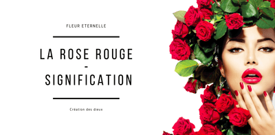 La Signification De La Rose Rouge