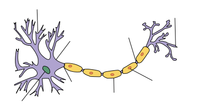 Hjärncell / Nevron / Brain Cell / Neuron