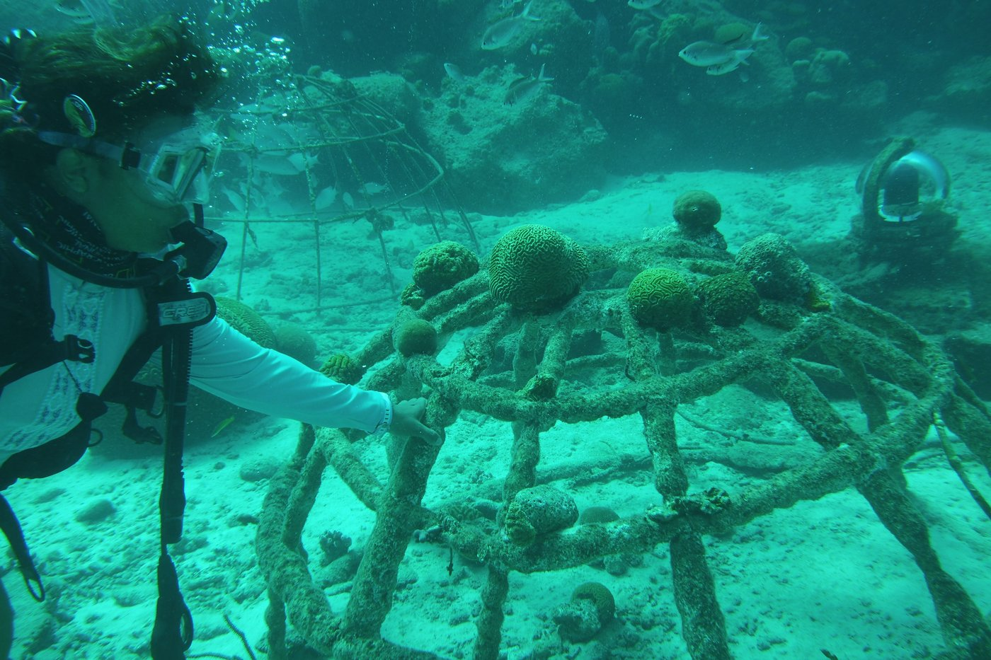 Reef Restoration in Bonaire