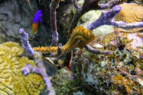 Really-Small-Things-That-Live-on-the-Coral