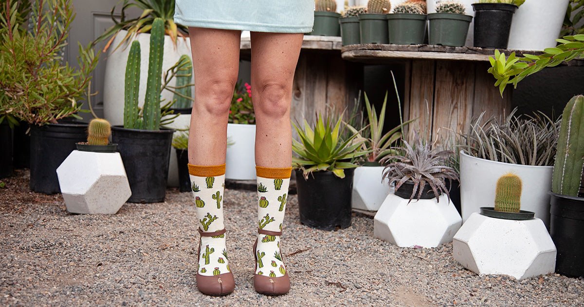 Cactus socks surrounded by cactus plants