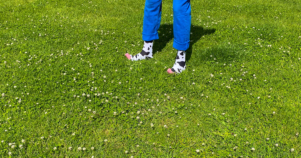 Spotted cow socks, with black spots on a white background, worn by a farmer standing in a field of green grass.