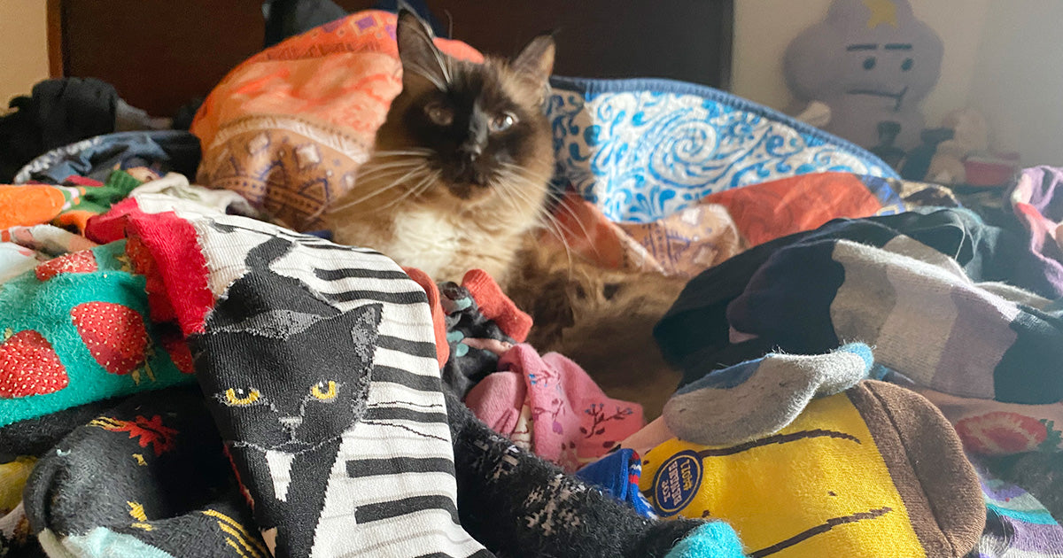Buddha the cat surveys his owner's sock collection.