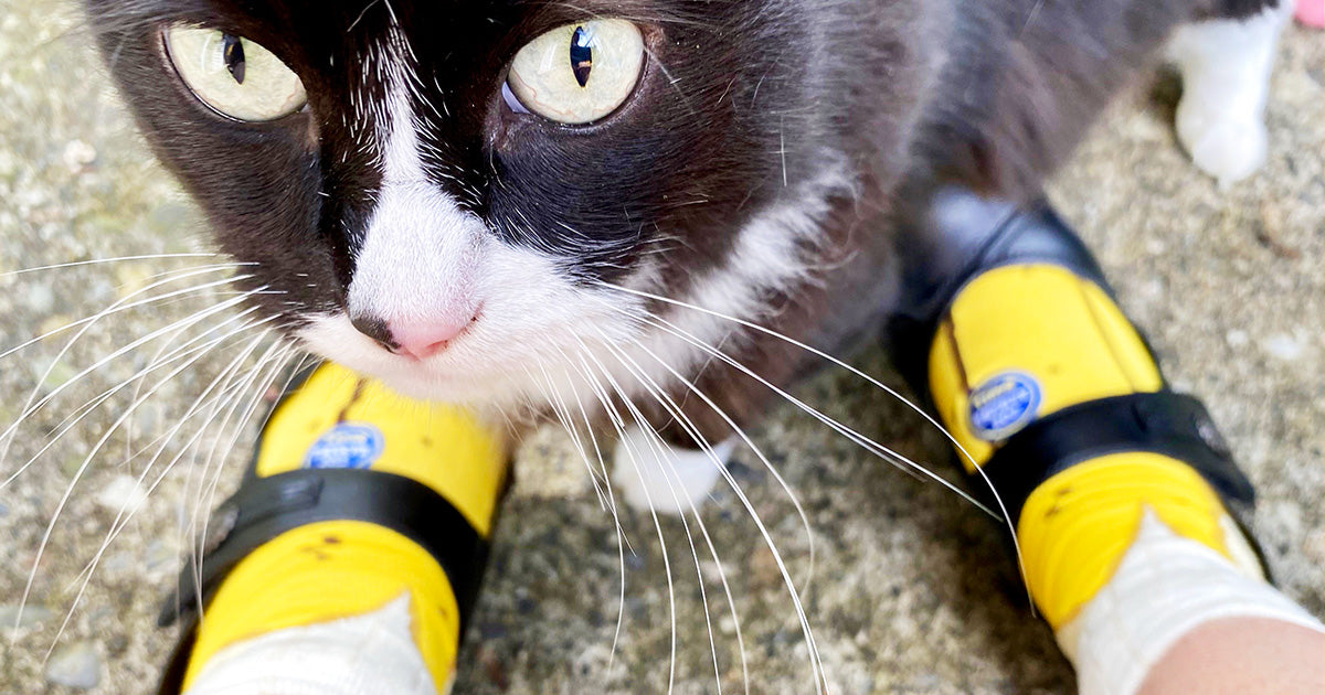 Cute banana socks and a tuxedo cat