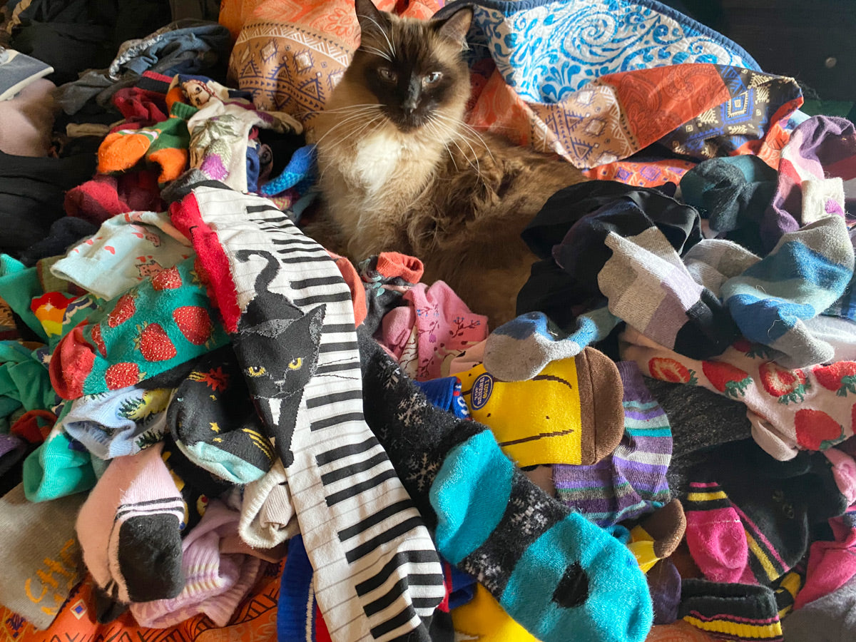 Pile of novelty socks with a cute cat sitting on them