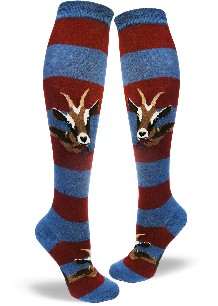 Hungry goats eat the stripes off these blue and red striped knee socks