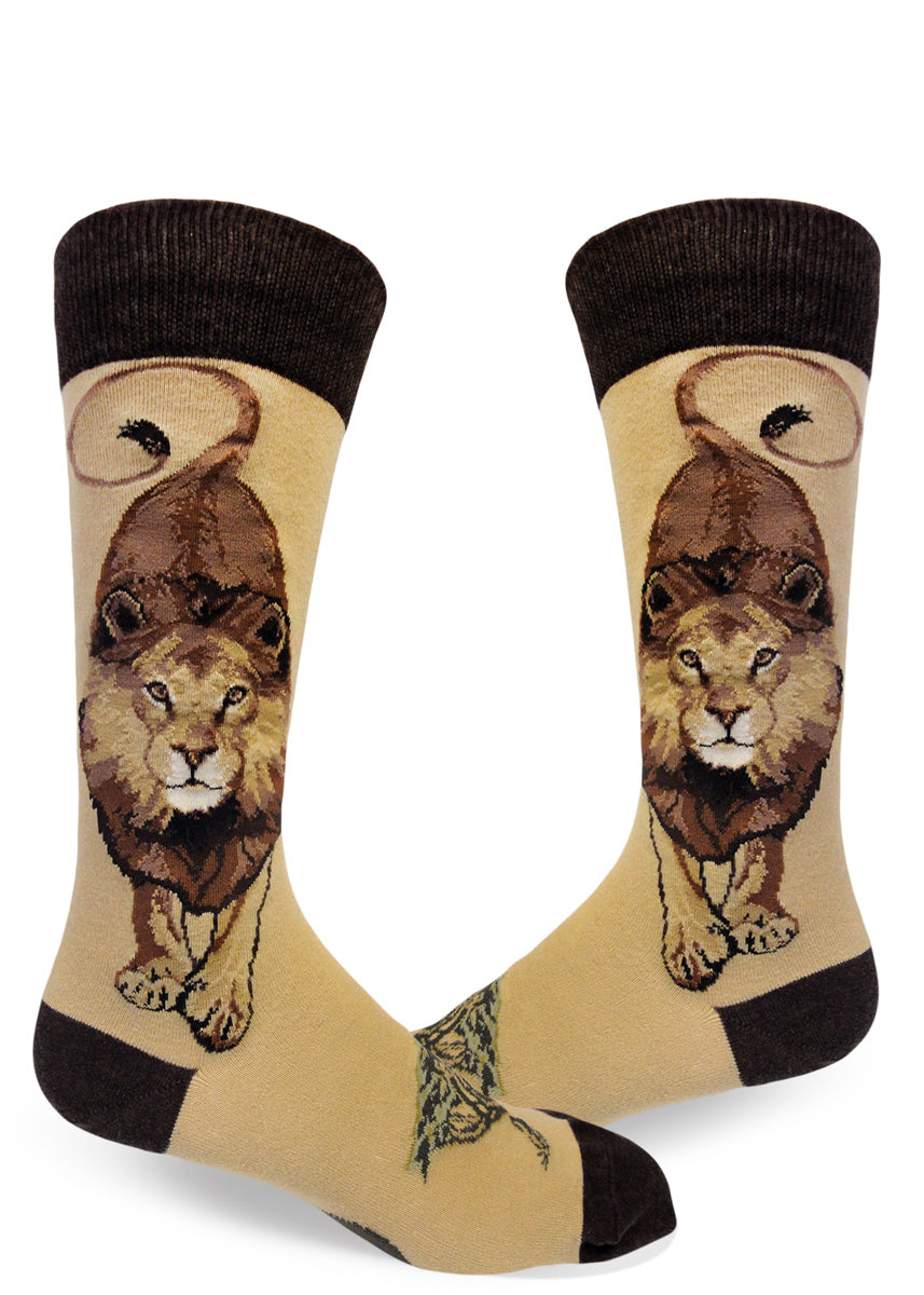 Lion socks for men with male lions facing forward and looking bold on a light brown background