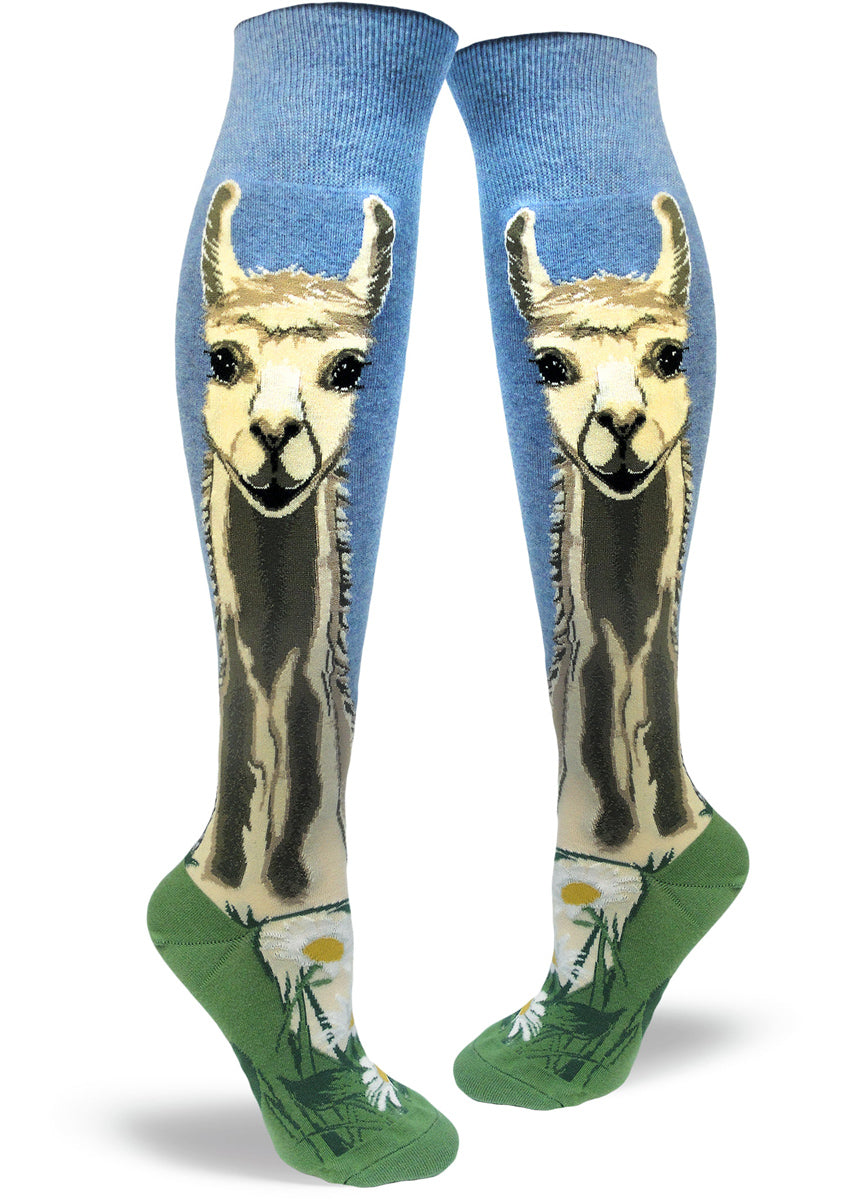 b2ea188f1d8 knee-high llama socks for women with llamas smiling against a blue sky and  green
