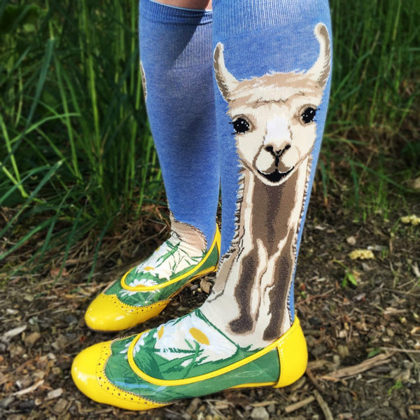 These llama socks make a stylish statement with a fluffy white llama resting on green grass and daisies under a blue sky.