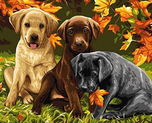 Puppies Painting by Numbers Kit