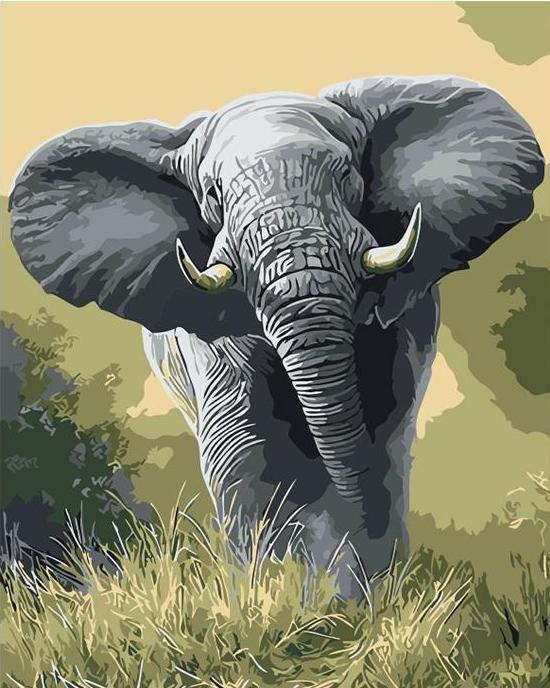 African Elephant Paint by Numbers