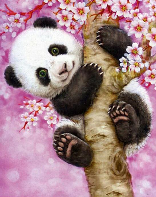 Baby Panda Paint by Numbers