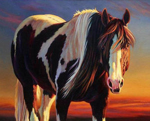 Horse with Long Hair Paint by Numbers