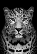 Load image into Gallery viewer, Black & White Leopard Paint by Numbers