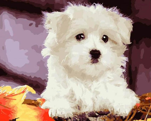White Puppy Paint by Numbers