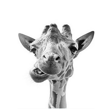 Load image into Gallery viewer, Giraffe Face Paint by Numbers