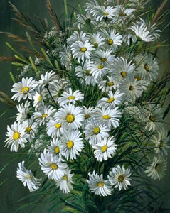 Gorgeous Daisies Paint by Numbers Kit