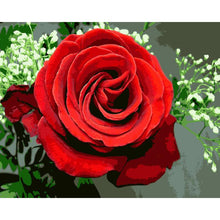 Load image into Gallery viewer, Gorgeous Red Rose Paint by Numbers