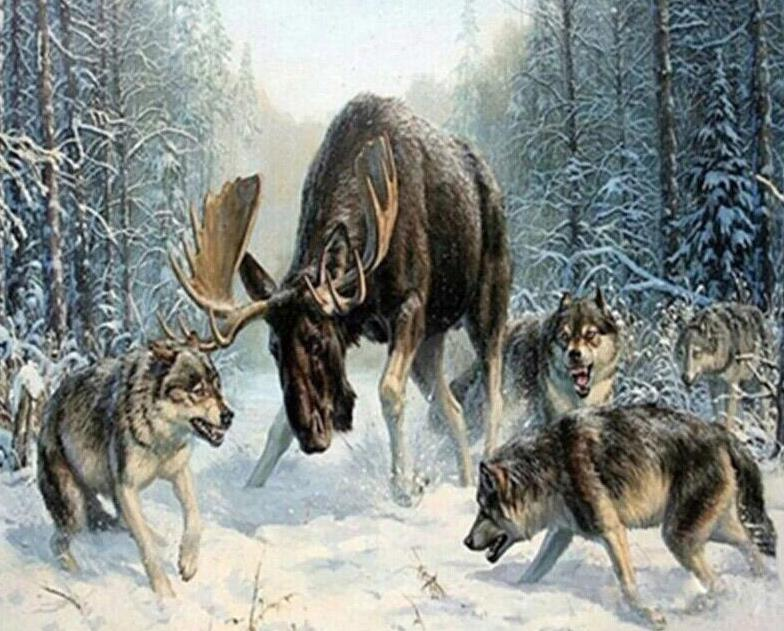 Moose & Wolves Paint by Numbers