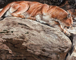 Mountain Lion Paint by Numbers