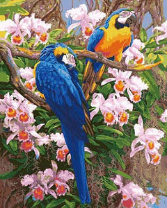 Parrots Paint by Numbers