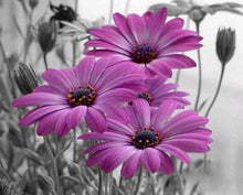 Load image into Gallery viewer, Rrimin Daisies Paint by Numbers Kit