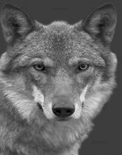 Load image into Gallery viewer, Stunning Wolf Paint by Numbers