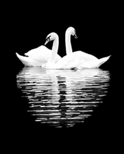 Load image into Gallery viewer, Swans Pair Paint by Numbers
