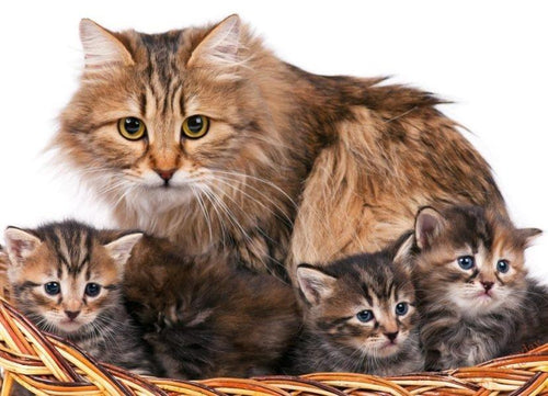 Sweet Cat Family Paint by Numbers