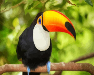 Toco Toucan Paint by Numbers