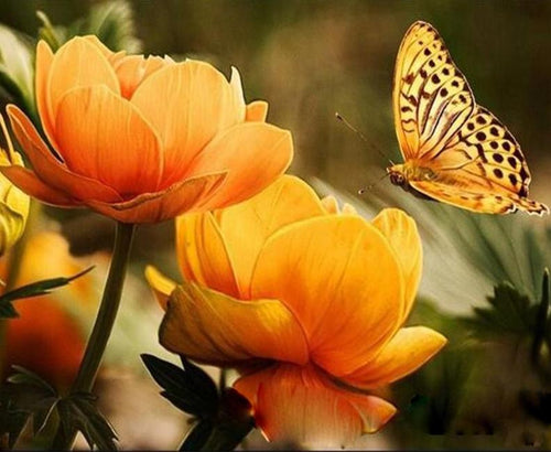 Flowers & Butterfly Painting by Numbers
