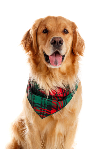 Lincoln Log Love Daddy Plaid Dog Handkerchief | Pre-Order | Delivery November 2018