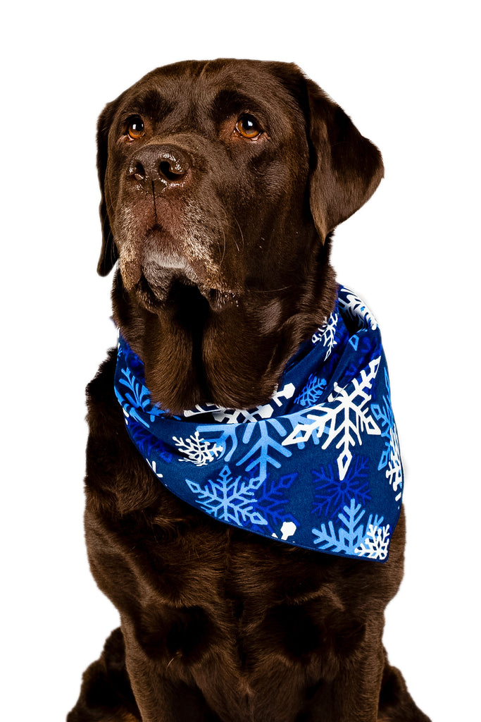 The Young Frosty | Christmas Snowflake Dog Bandana