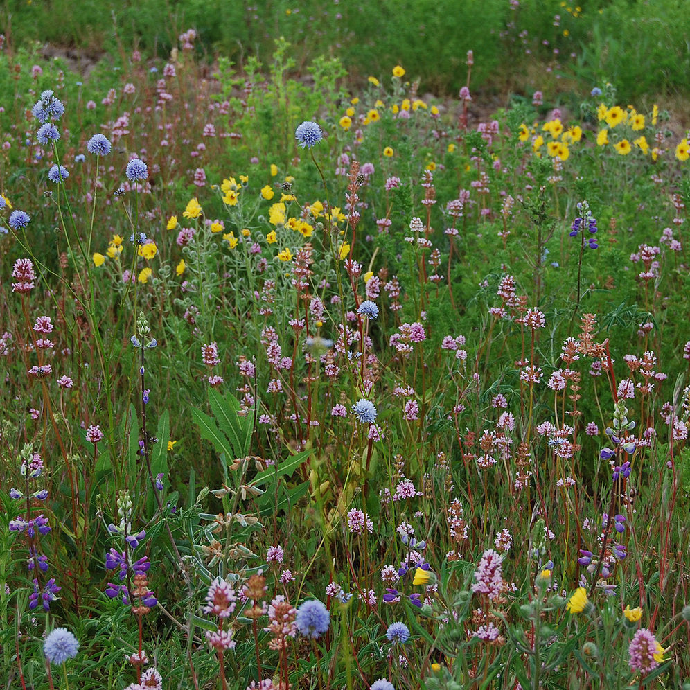 Willamette Valley Pollinator Mix