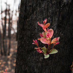 After the fire, 3 simple steps for regenerating you and our environment