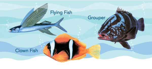 A First Look At Philippine BIRDS, BUTTERFLIES & FISHES  Board Book