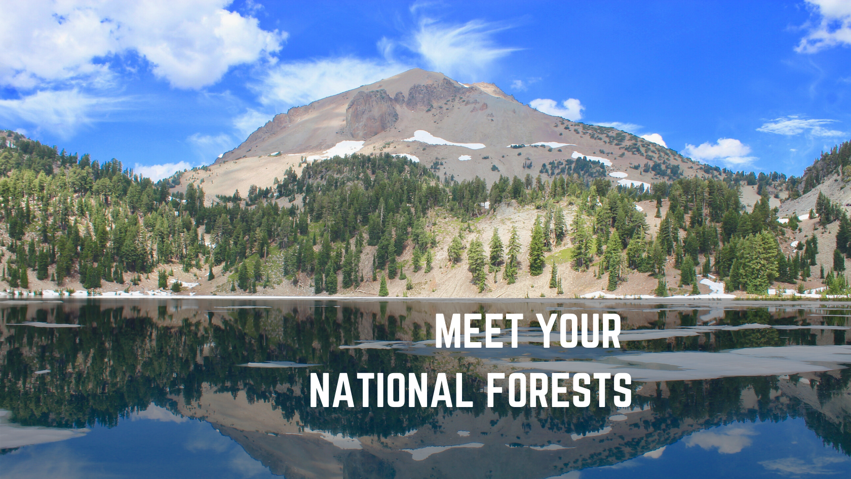 Boxed Water is Planting Trees in These 7 National Forests