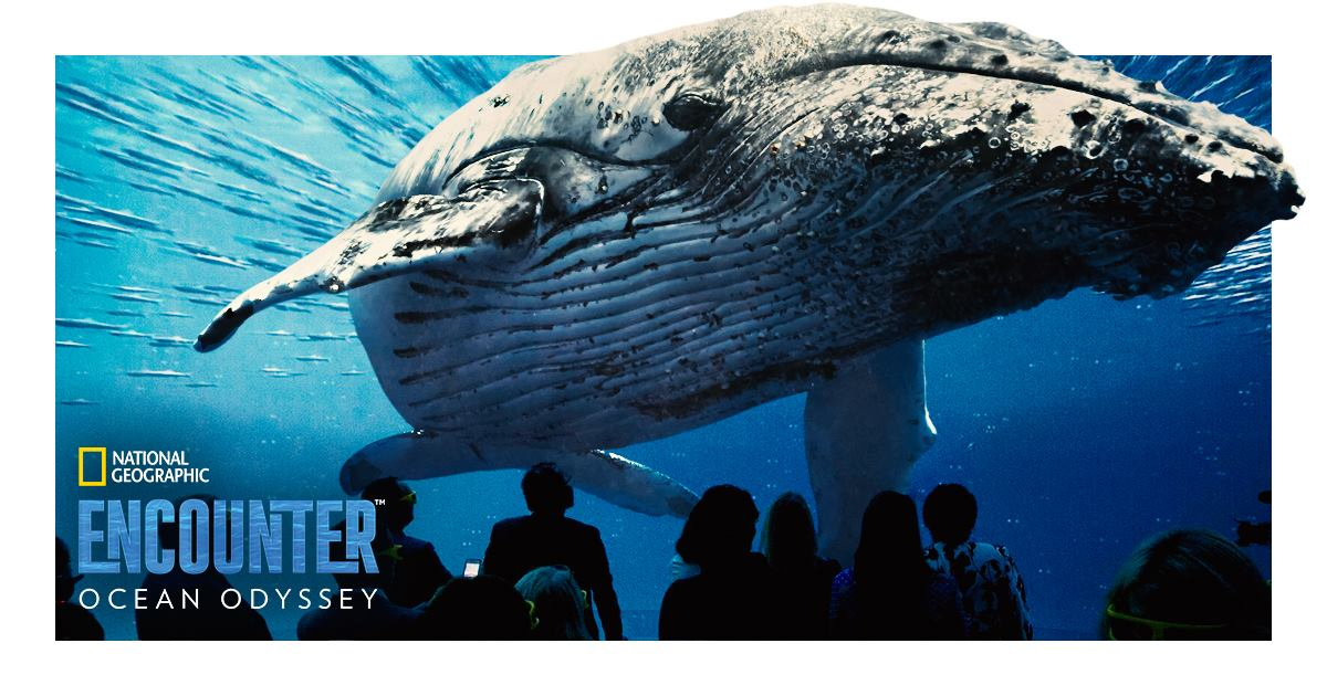 Dive Deep into our Oceans with NatGeo Encounter: Ocean Odyssey