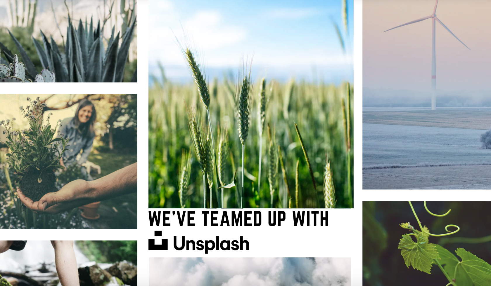 Boxed Water + Unsplash Team Up to Plant More Trees