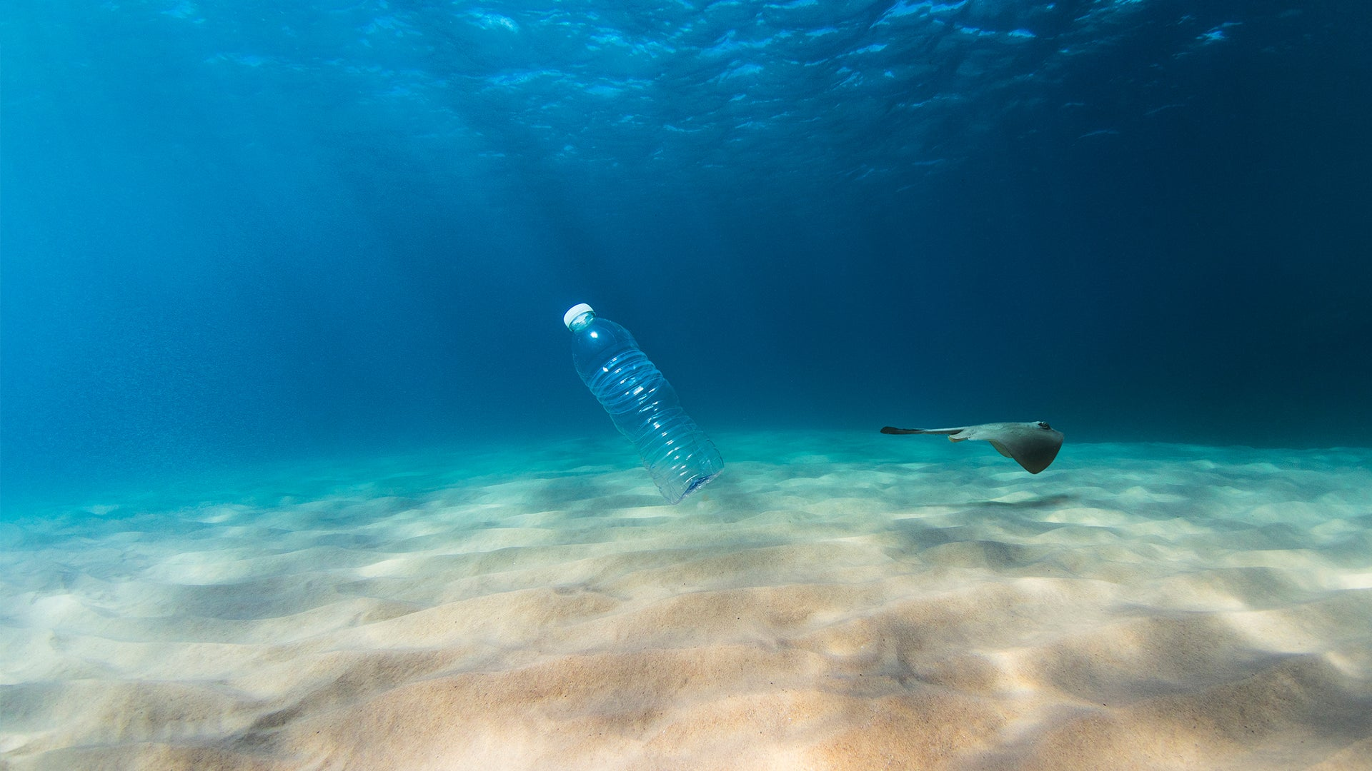 Our Oceans are Drowning in Plastic