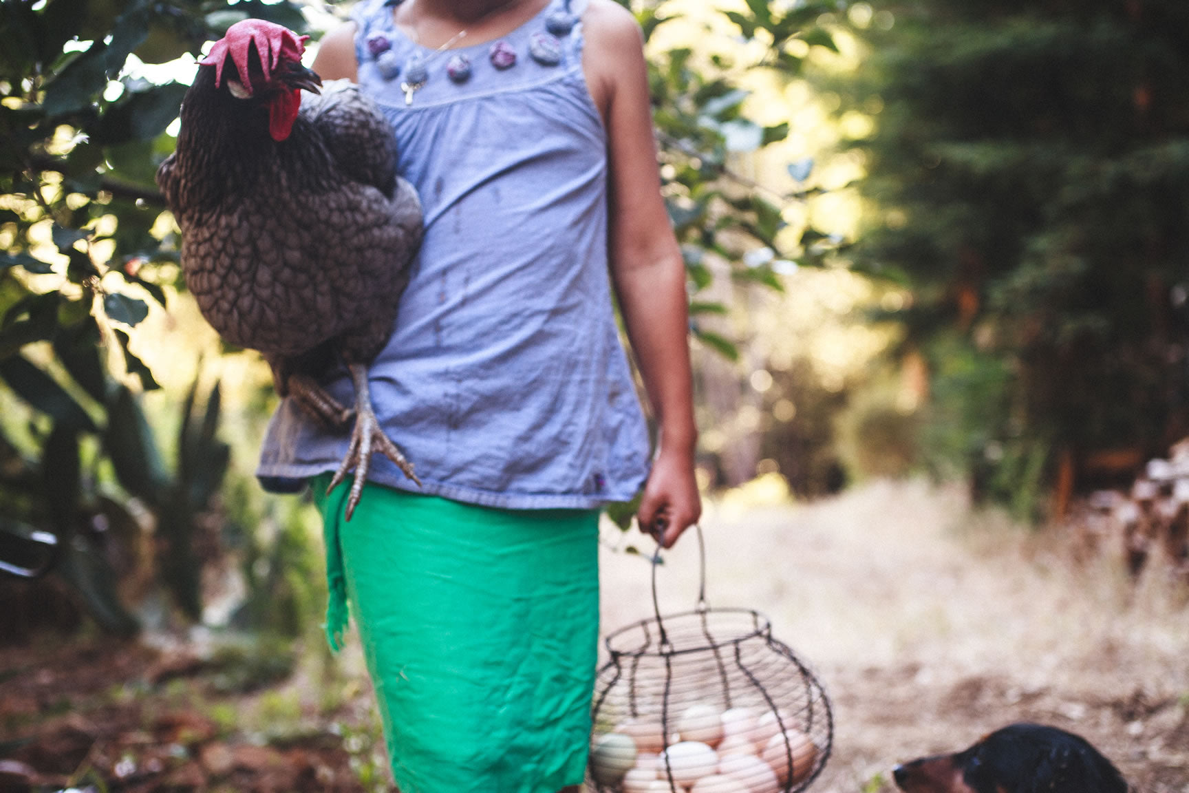 how to have a backyard chicken coop 6 essential questions for