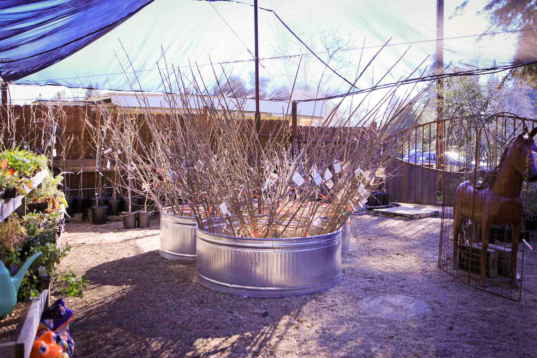 best bare root fruit trees for starting out our 3 favorites