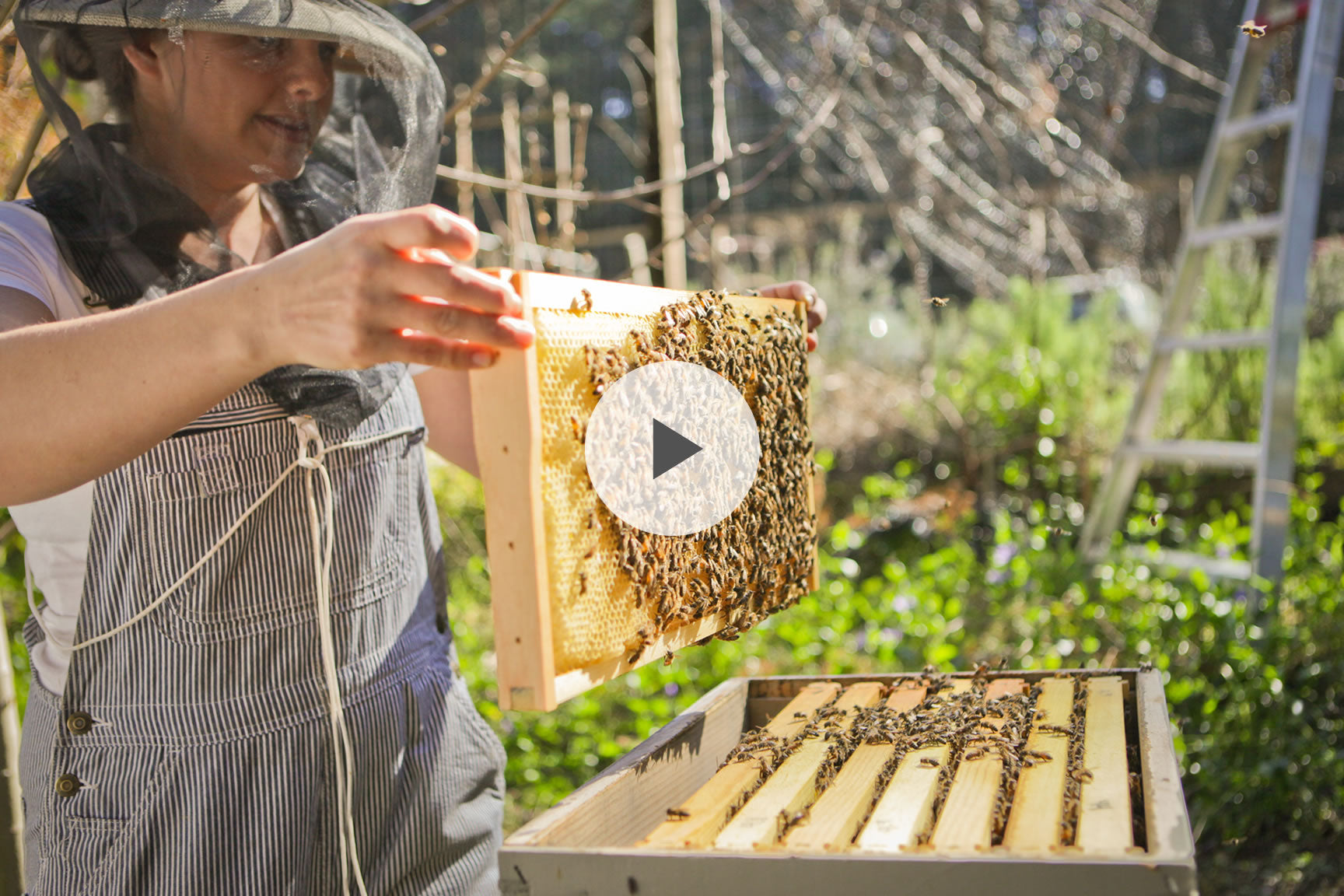 how to beekeeping