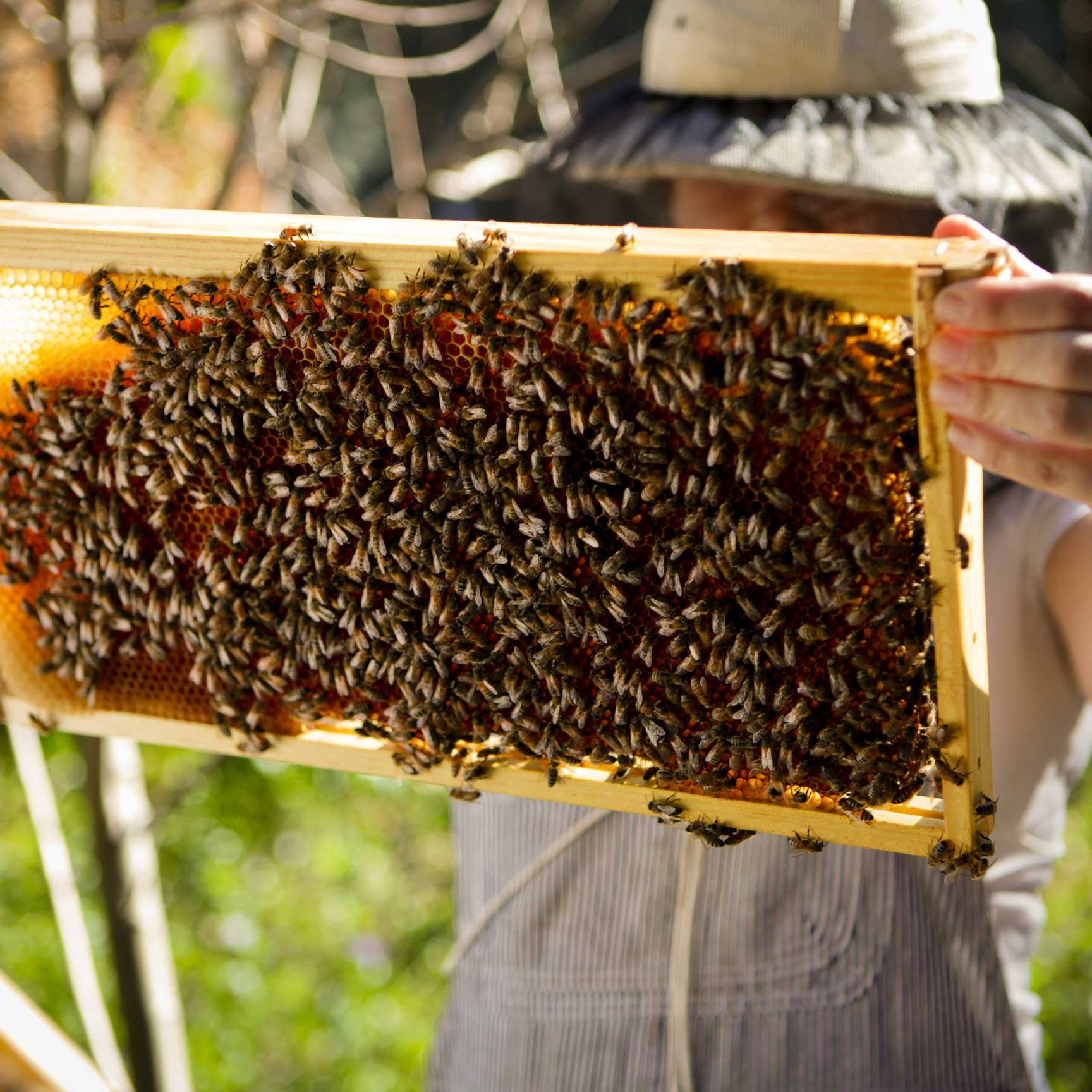 beekeeping season supplies and equipment and classes