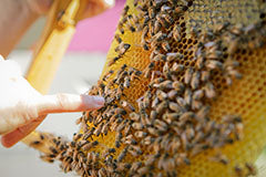 beekeeping lecture
