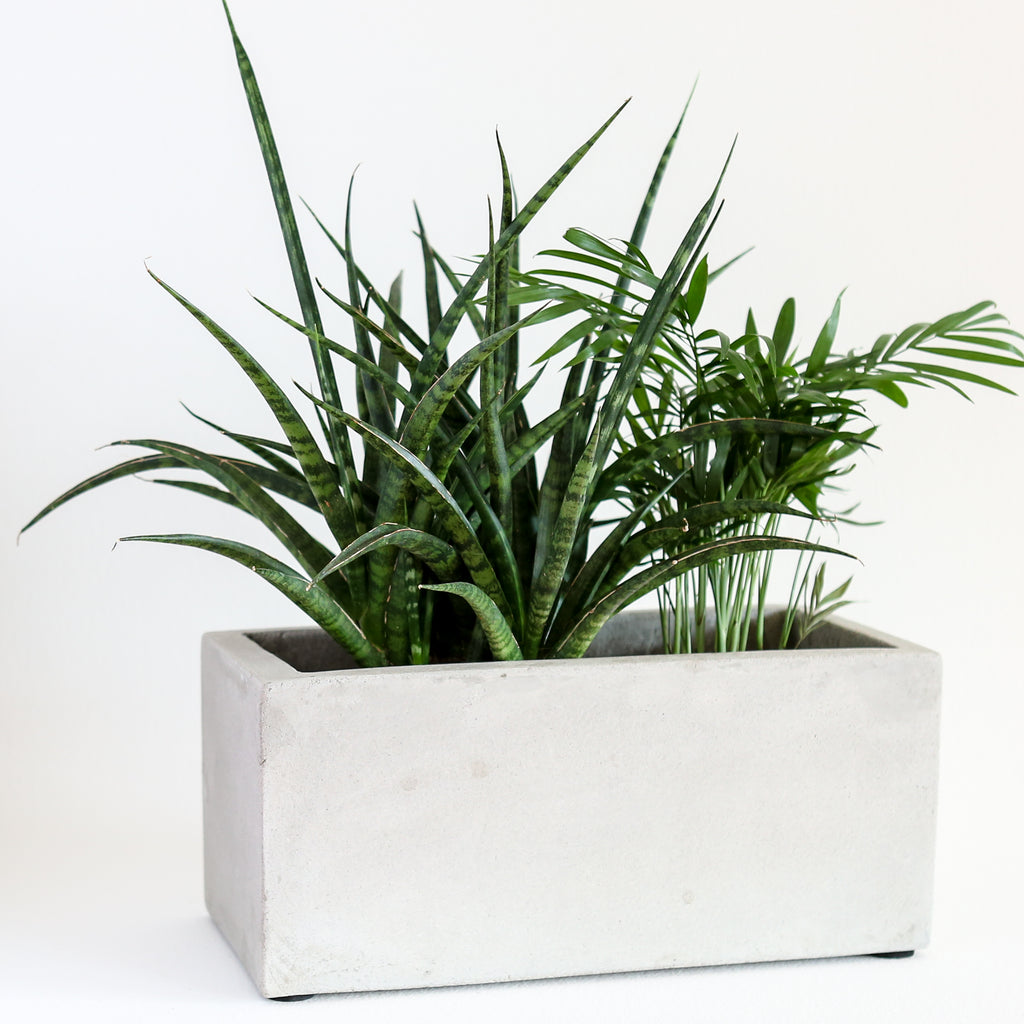 Concrete Rectangular Planter