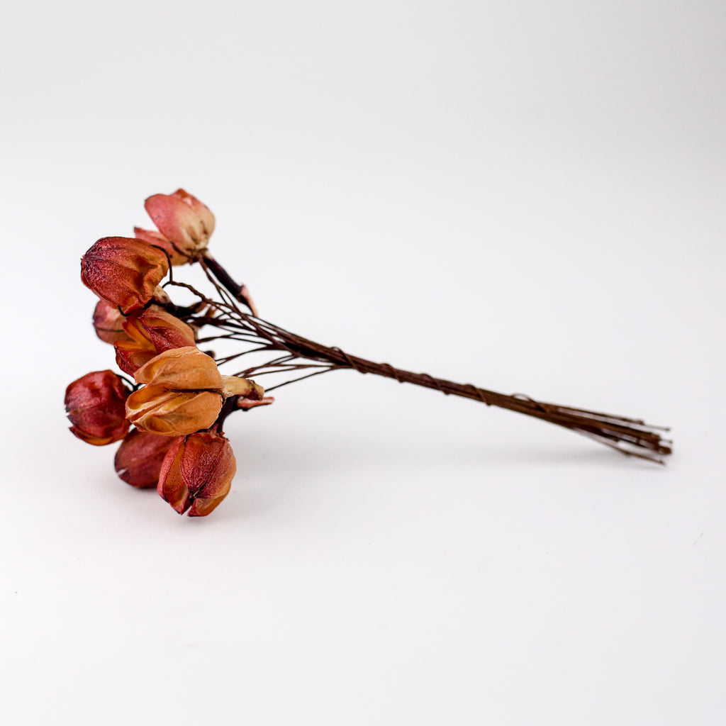 Decorative Dried Flower Bunch - Seed Blush