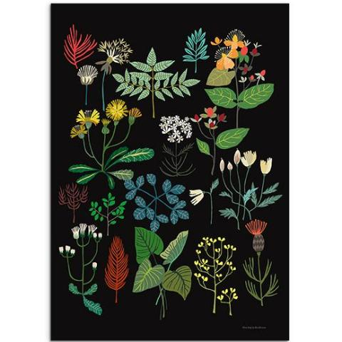 A3 Plant Study Art Print by Brie Harrison